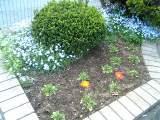 Flower060418_01