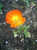 Flower060418_02_1