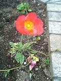Flower060418_03_1